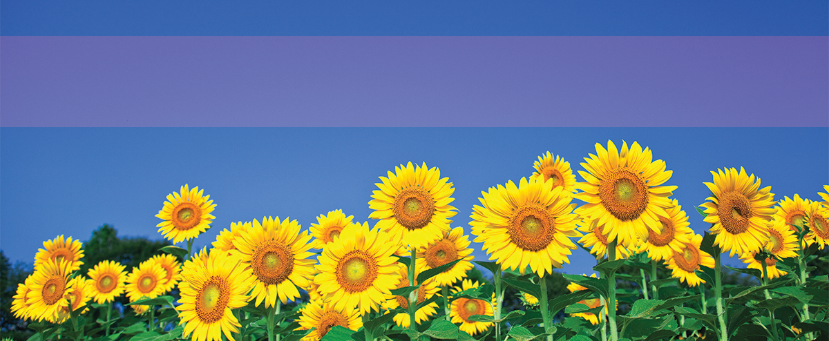 Sunflower web image before PrintFlat is applied